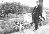 Bakker A.Hellinga op de Sweagsterwei vent zijn vers gebakken roggebrood en andere waren uit. Het was in de jaren dat honden nog als trekdieren werden gebruikt.