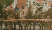 Vijftien pinken, een paar stierkalveren en drie pony's. Meer werd er in het voorjaar 1998 niet aan levende have aangeboden op de Gerdykster Merke. De Traditionele voorjaarsmarkt is vrijwel verworden tot een gewone braderie. (foto Harry Blokzijl).