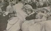 1990 Oktober, Een eenzame pony trok gisteren meer de aandacht van vier Gorredijkster meisjes dan van de handelaren. Een beetje afzijdig van de aangevoerde koeien en kalveren werd het dier op de traditionele Gerdykster Merke al snel de troetel van de vier. Gezelschap van soortgenoten had het dier niet, want er waren verder geen pony's en paarden aangevoerd. Vorig jaar was er sprake van een rampeditie maar ook dit jaar speelde het slechte weer de Gerdykster Merke parten. As moarns it waar net goed is, dan wurket dat de hiele dei troch, aldus marktmeester Tjeerd Popkema. Nadat het weer was opgeklaard kwamen er toch nog enige duizenden bezoekers langs de 150 kramen. De aanvoer van 92 koeien en kalveren betekende een forse stijging. Bij de schapen was er sprake van een lichte daling. Vorig jaar waren het er nog twaalf, nu vulden acht ' woldragers de hokken. (Foto LC Jan de Vries)