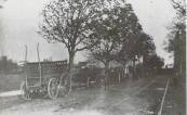 De veewagens opgesteld tijdens de veemarkt