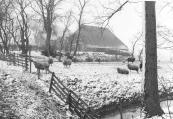 Boerderij in Gorredijk in maart 1985