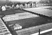Het glastuinbedrijf van de gebr.v.d.Schoot aan het zuideinde van de Brouwerswal, toen nog Kortezwaag. Timmerfabriek de vries bouwde hier later haar kantoor en fabriekshallen