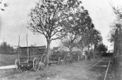 Met boerenwagens werd het vee naar de markt vervoerd. De lge wagens werden aan de Hegedyk gestald. Links het huis en de houtzaagmolen van Posthuma aan het noordeinde van de Molenwal. Deze foto werd voor de afbraak van de molen in 1912 gemaakt.