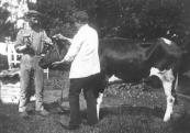 Sikke Dokter (l) en Roelof Hemkes in 1911. Dit was de eerste koe die zij met een schietmasker doodden. Leverancier van de koe was Hans Melles van der Wal in Lippenhuizen.